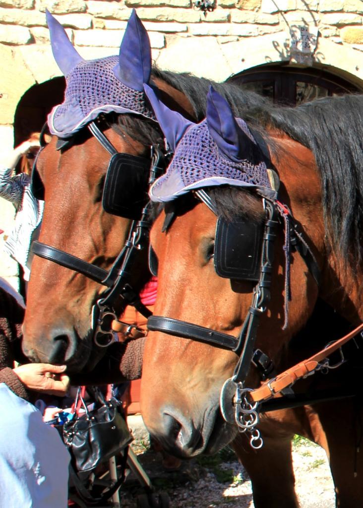 On peut admirer les jolis couvre-chefs de ces fiers chevaux tirant un attelage