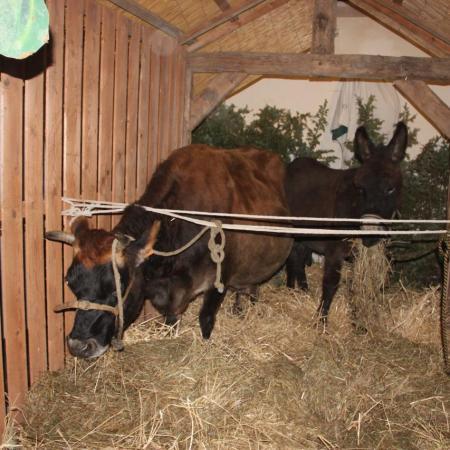 24 décembre, 20h00, Et les voilà installés dans la crèche...