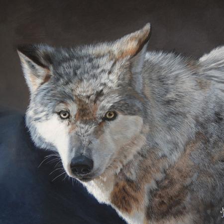 Marion velten loup regard